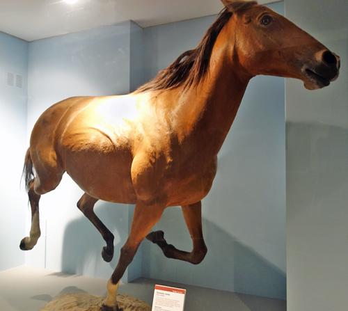horse500